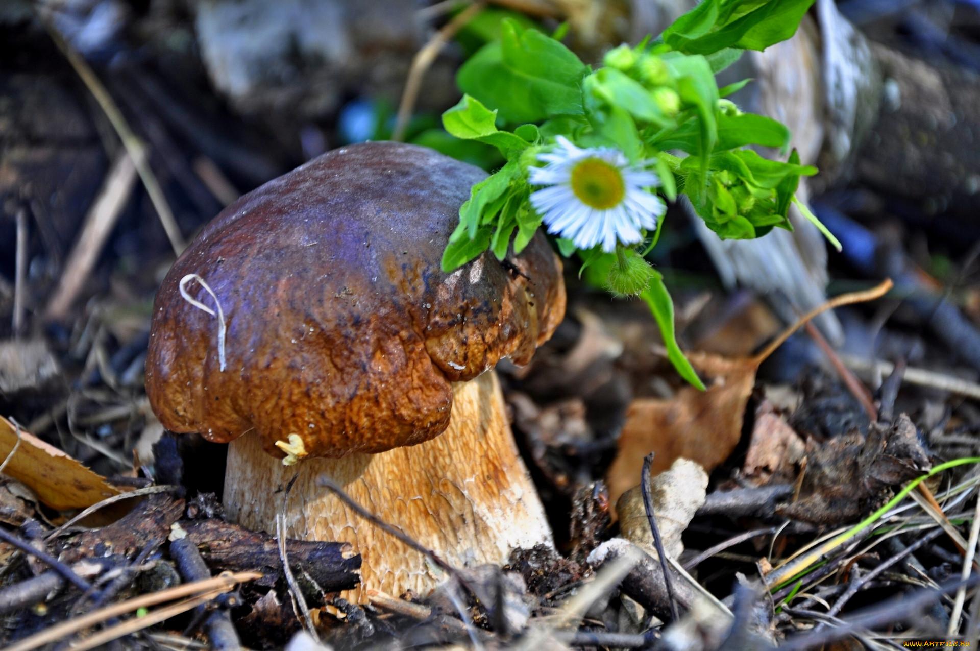 картинки о природе растениях и грибах подобных